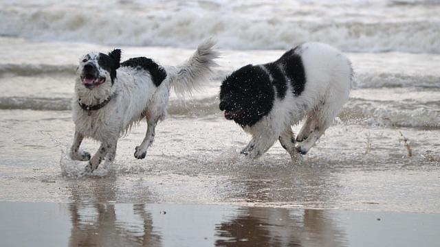 Dwa sy bawiące się w wodzie