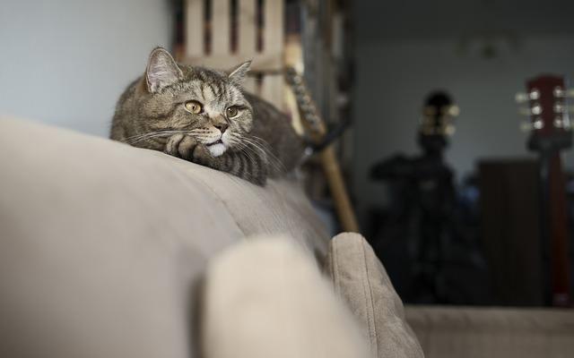 Kot bawiący się na kanapie