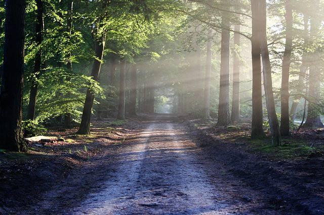 Dróżka oświetlona słońcem, w lesie
