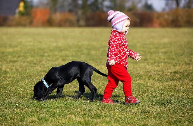 Dziecko z psem na trawie