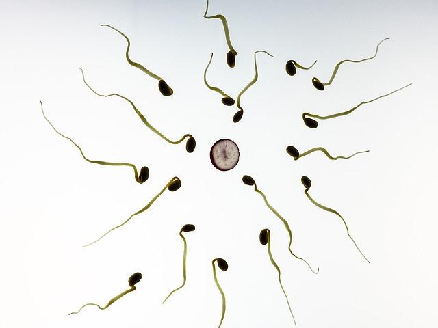 Plemniki i komórka jajowa