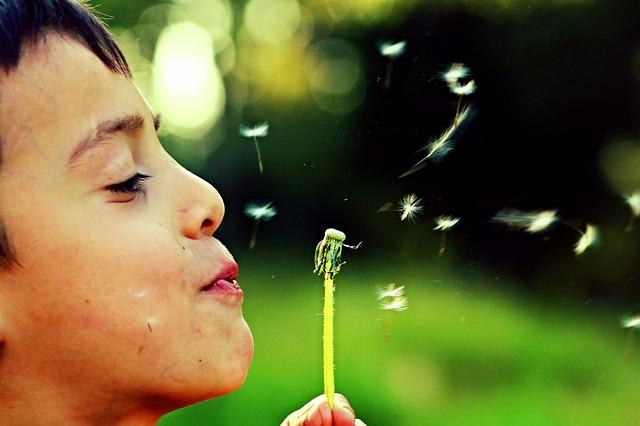 Dziecko dmucha kwiatka