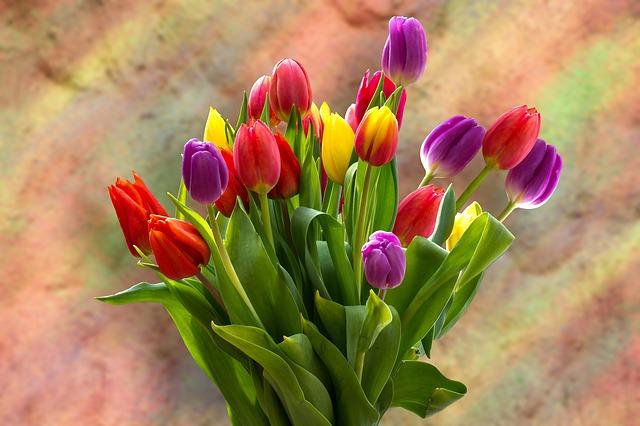 Bukiet tulipanów